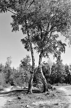 Dansende Bomen von DoDiLa Foto's