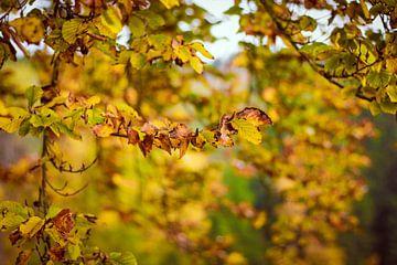 Gele herfstbladeren von Petra Brouwer