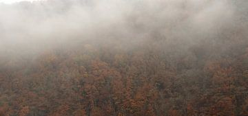 Des arbres dans le brouillard sur Rachied Soebhan