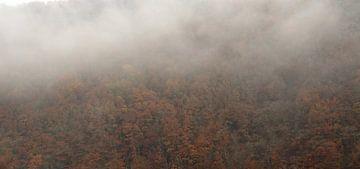 Bäume im Nebel von Rachied Soebhan
