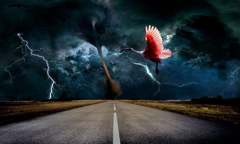 Tornado van Frank Batenburg