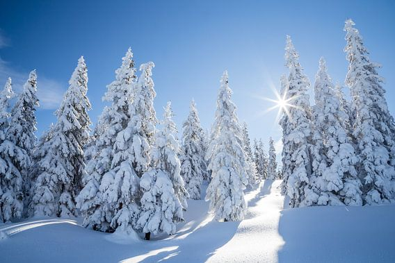 """Winterlandschap """"Winter Wonderland """" van Coen Weesjes"""