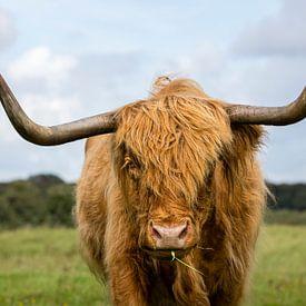 Schottischer Highlander Porträt von Richard Guijt Photography