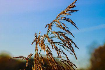 """""""All I see is dust in the wind"""" van Scarlett van Kakerken"""