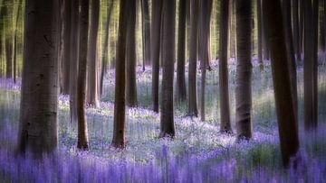 Forêt de rêve sur Jeroen Linnenkamp