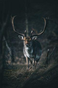 Damhert in het bos van Abby's Voyage