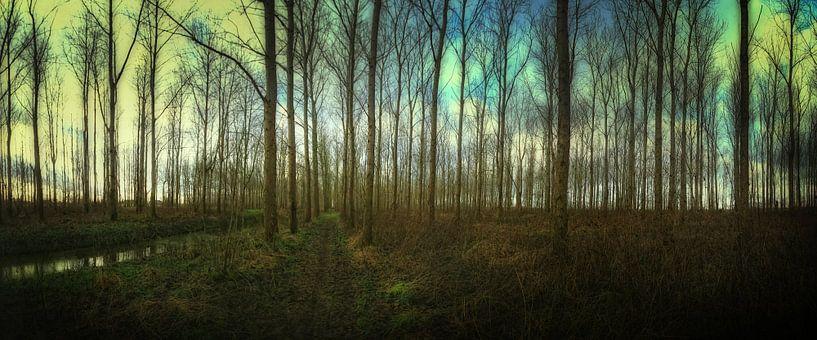 A Forrest van Eppo Karsijns