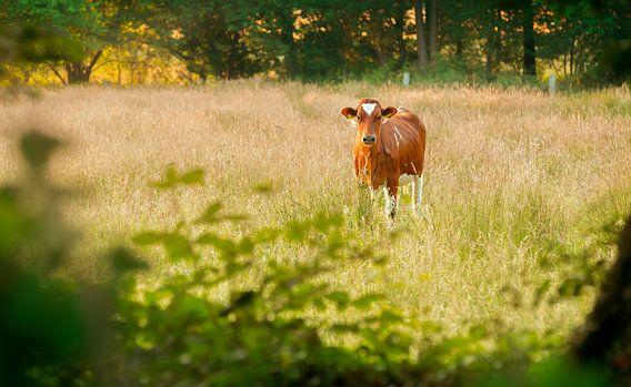 Dutch cow van Sabine Bartels