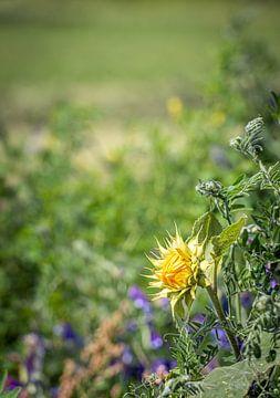 Knospende Sonnenblume in einem holländischen Feldrand von Ruud Morijn