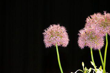 Blumenkunst auf Floralien von Willem Holle WHOriginal Fotografie