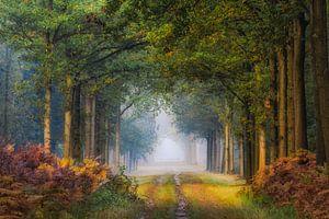 Het pad van Jos Erkamp