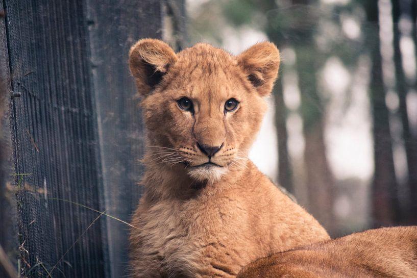 Het Leeuwenwelpje van Sven Wildschut