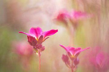 Vergeten bloemetjes van Francis Dost