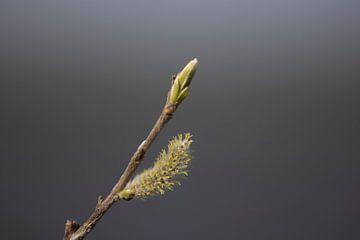 Der Frühling kommt von Lynlabiephotography