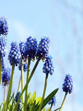 Blue monday ;-) van Maartje Kuperus