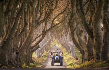 Traktor nähert sich an der Dark Hedges von Roelof Nijholt