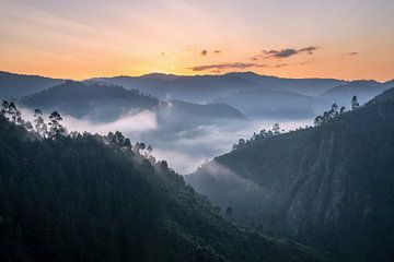 Bwindi Nationaal Park, Oeganda van Alexander Ludwig