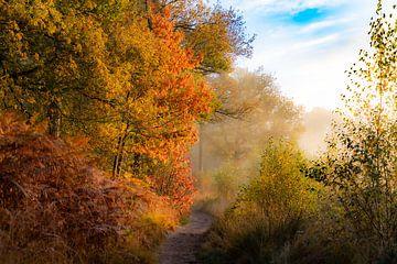 Herfst in Oisterwijk van Jacky Keeris