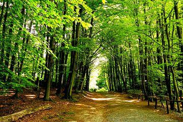 Frühlingswald sur Ostsee Bilder