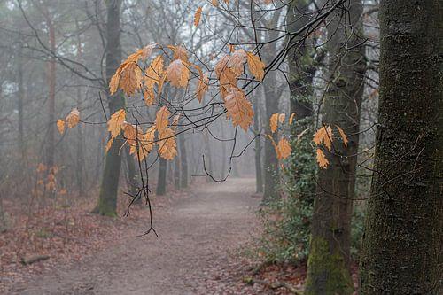 Herfstblaadjes in mistig bos
