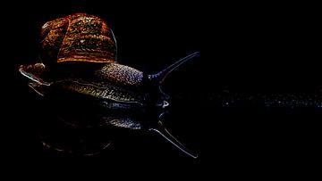 De slak in de wereld van het zwart van Studio de Waay