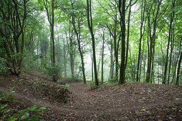 Wandelen in het bos van Wilbert Van Veldhuizen