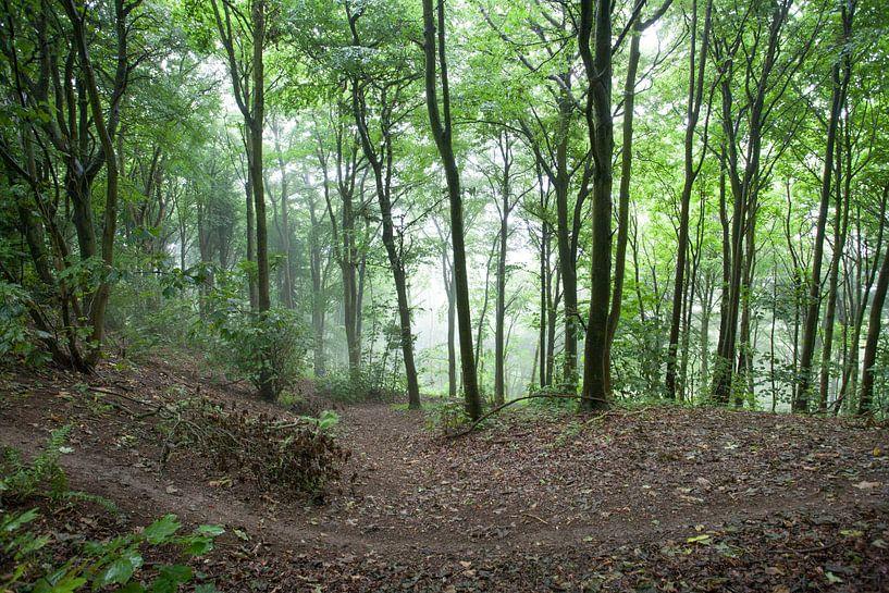 Wandelen in het bos von Wilbert Van Veldhuizen