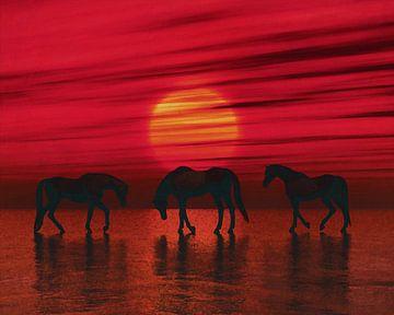Arabische paarden in de schemering