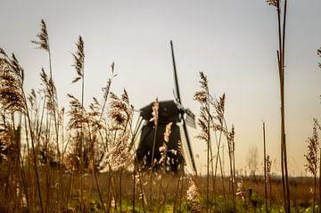 Windmill in the reedbed sur Yvon van der Wijk