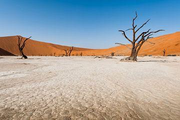 Deadvlei, Namibie, Afrique. sur Ramon Stijnen