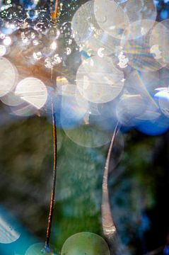 Makrofoto in der Natur aufgenommen von angelique van Riet