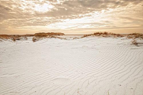 Dunes dans la lumière du soir
