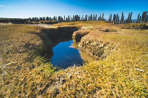 Waddenzee kwelder landschap bij Moddergat