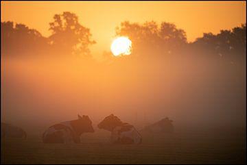 Dutch Cows in sunrise van E.H. Efek