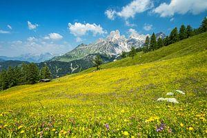 Alpenweide Bischofsmütze