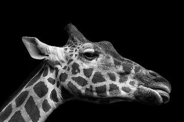 Giraffe van Hermann Greiling