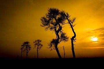 Zonsondergang op de Hoge Venen von Antwan Janssen