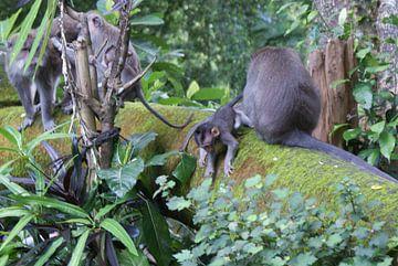 Aawh! A baby monkey! van