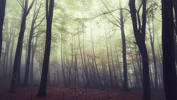 Dromerig bos van Dick Carlier