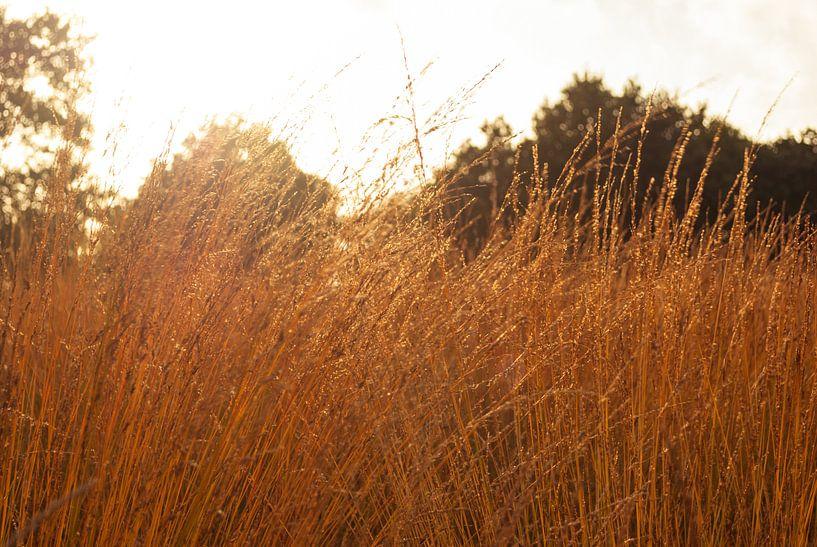 Fields of Gold van Gert Tijink
