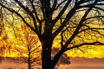 Boom in ochtendlicht van Wendy van Kuler
