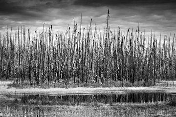Gebrannter Wald, Kanada. Schwarz und weiß von Rietje Bulthuis