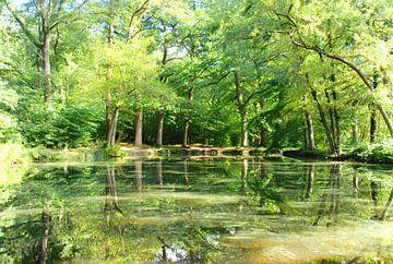 Spiegeling in het bos van het Renkums Beekdal. van Jurjen Jan Snikkenburg