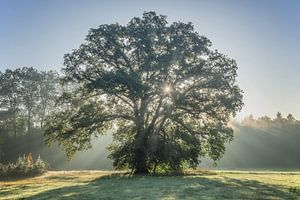 Sparkling tree van