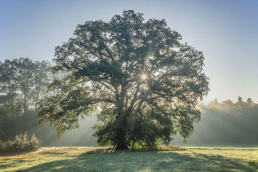 Sparkling tree van Diana de Vries