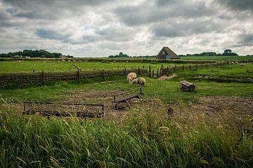 Schapen weiland Texel von Lotte Klous