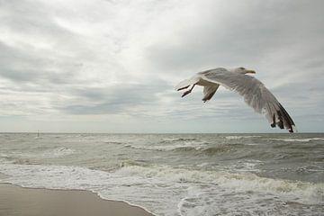 Meeuw op het nederlandse strand van Tess Groote