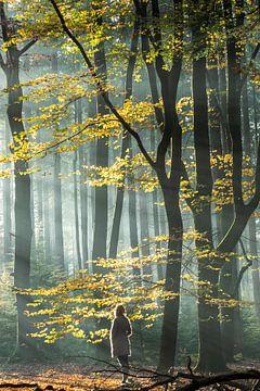 Nebliger Sonnenaufgang im Wald von Speuldersbos von Peter Haastrecht, van