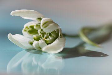 Blumen Schneeglöckchen von Jefra Creations