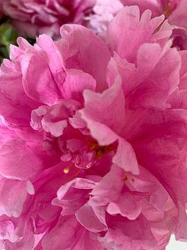 Pioen roos van Janneke Bijl